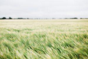 果てしない草原